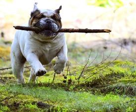 dog-woohoo 2403747_1280